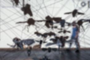 flys-5.jpg לבן.jpg