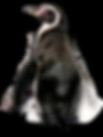 pinguin_PNG14kopie schoon.png