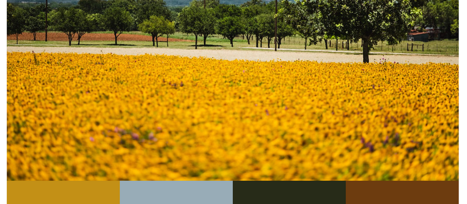 The Colors of the Texas Hill Country