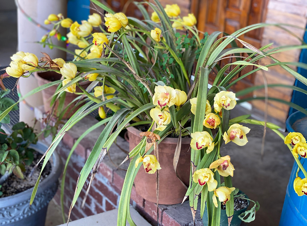 yellow and magenta flowers in a rustic pot.