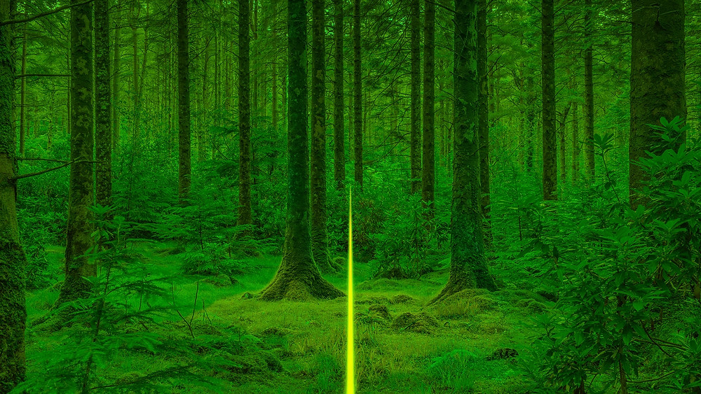forest with yellow light