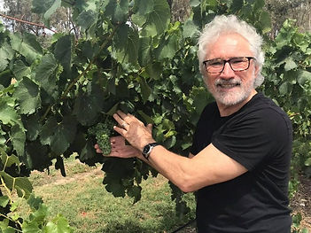 Steliano holiding a bunch of Riesling grapes in Summer.