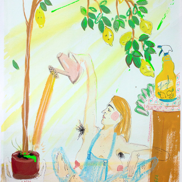 Watering My Indoor Lemon Tree