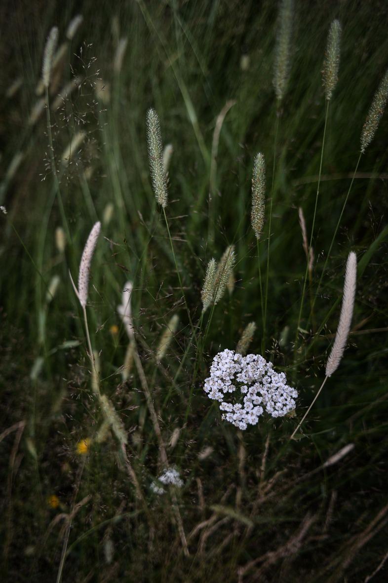 Natura1039_edited