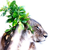 C.G. Photographies - Colin Grzanna Photographies, Animals, Predators, Mammals, Nature, Birds, wildlife, Naturelovers,