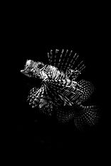 Predators, Lions, Cheetahs, Hyeans, Crocodiles, Africa, Wildlife, Leopard, Puma, Namibia, Botswana, South Africa, Safari