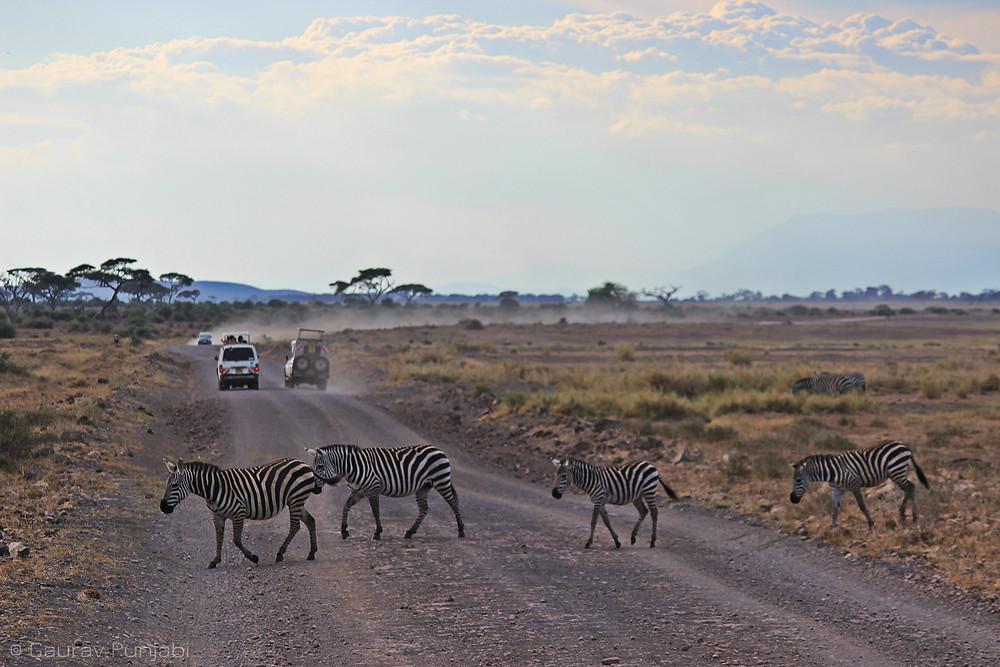 Amboseli 2.jpg