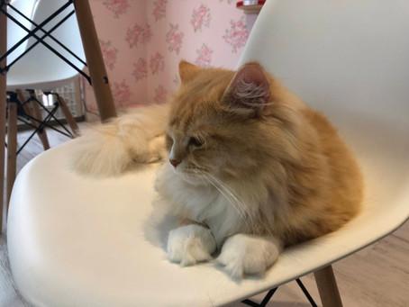 猫カフェ散策②<猫ちゃんといっしょ編>