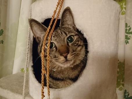 【猫飼い初心者必見】猫と暮らすために準備したほうがよい意外なものとは?