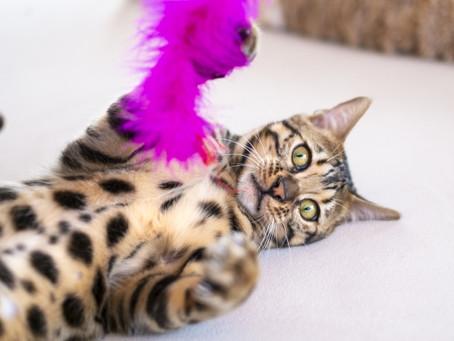 【猫初心者さんへ】猫のおもちゃは消耗品です。。。