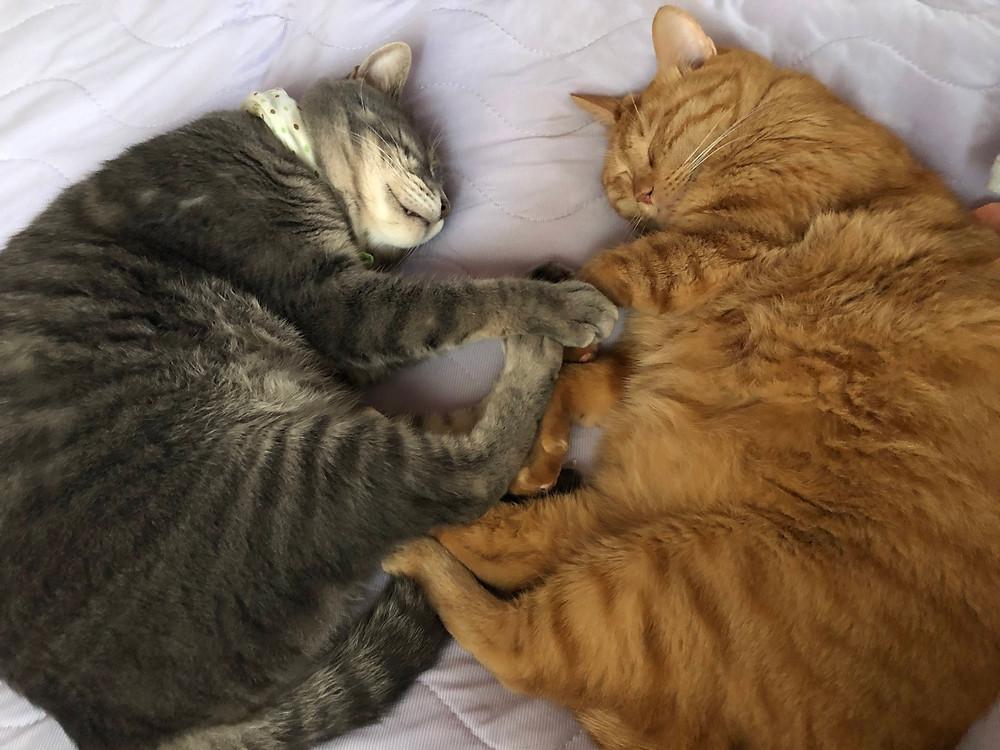 我が家のレオとリキです。こんな姿を見たいのでしょうか?