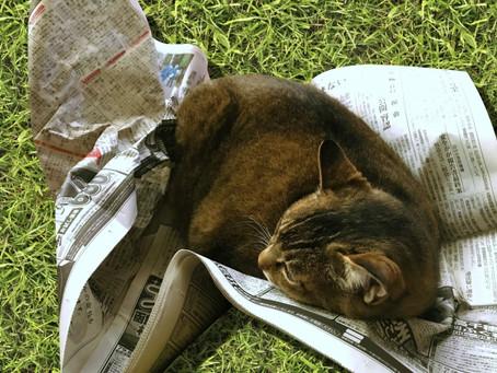 まなびばsippo「猫の正しいしかり方」セミナー備忘録