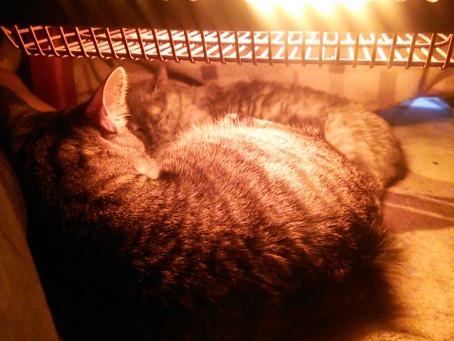 猫ちゃんの寒さ対策の注意点。○○には気を付けて!