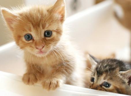 ワンルームでも猫は飼えますか?②