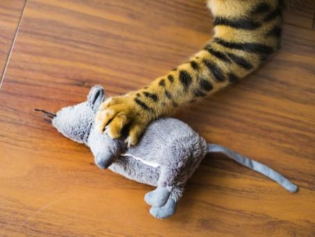 【猫初心者さんへ】猫のおもちゃはすぐに飽きられます。。。
