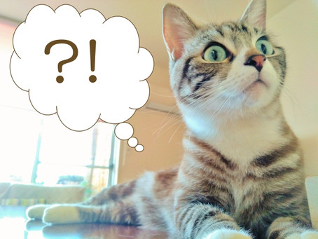 鉱物系の猫砂がおすすめなのが本当か実験してみました!