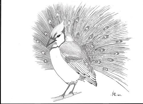 Le geai paré des plumes...(fable)