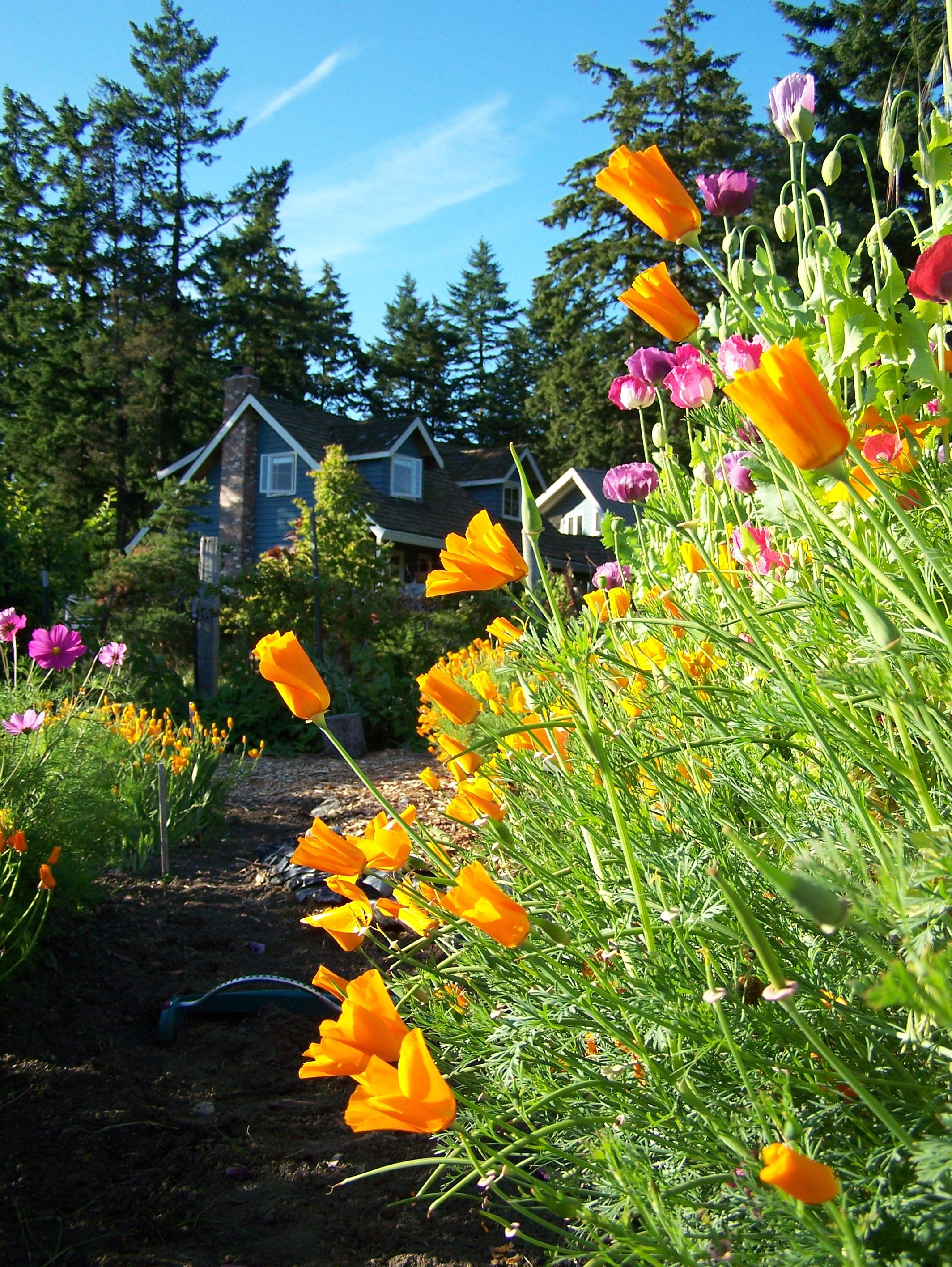 DDF Seasons Early Summer