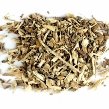 Chicory (Cinchorium intybus)