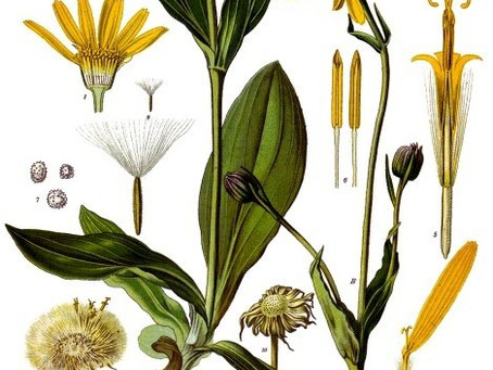 WE'RE ALL ABOUT ARNICA