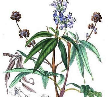 Medicinal Herbs for PMS!