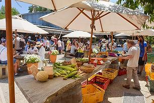 Matakana-Village-Farmers-Market-04.jpg