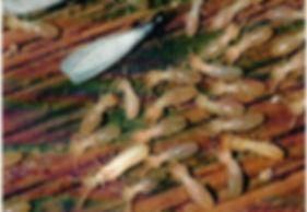 Stockbridge Termite and Pest Control