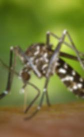 Stockbridge Mosquito Control