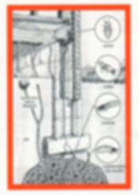 Termite Control Stockbridge Ga