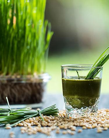 wheatgrass42.jpg