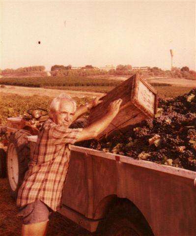 ראובן בעת הבציר בשנת 1981. ברקע רואים את גדרה