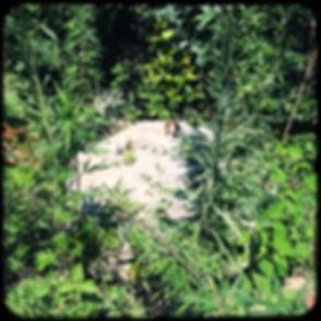 HipstamaticPhoto-555413864.107451.jpeg
