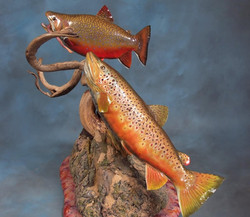 Brook and Brown Trout
