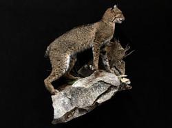 Full body Bobcat on base