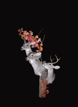 Three Whitetail Deer