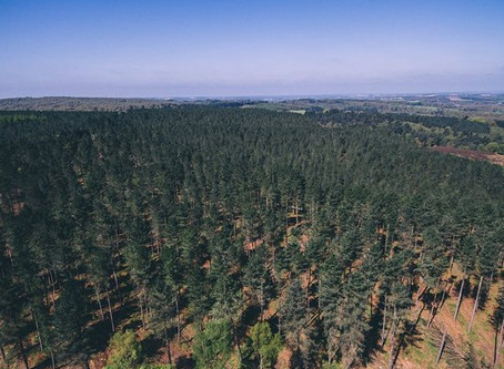 Cannock Chase Sky Watch 2014