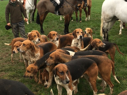 The North Staffordshire Hunt meets twice during January 2020 in Norton in Hales