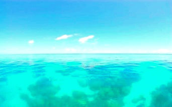Great Barrier Reef background