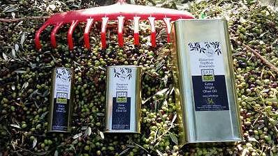SAFIkala Olive Oil Harvest
