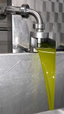 Recently-extracted, new extra virgin olive oil