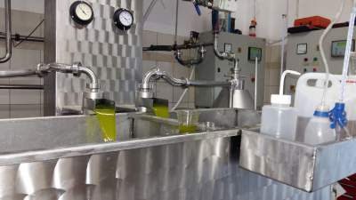 The making of early harvest extra virgin olive oil