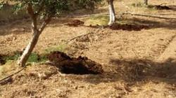 Versorgung meiner Olivenbäume