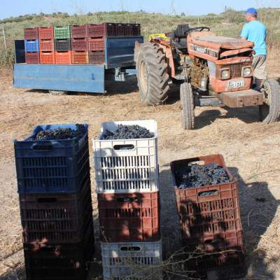 Crates ready to be loaded onto my tractor