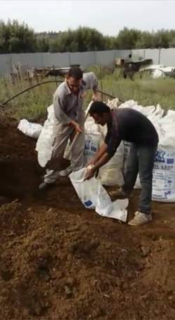 Filling sacks of manure with a spade