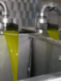 Extracting Extra Virgin Olive Oil