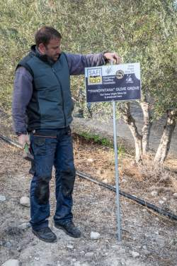 The Tramontana Olive Grove sign post