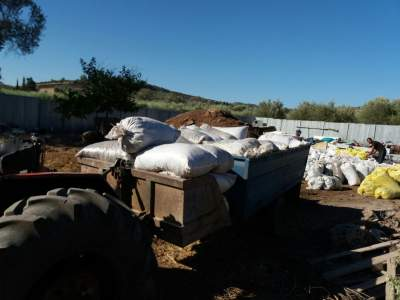 Collecting and loading the manure bags