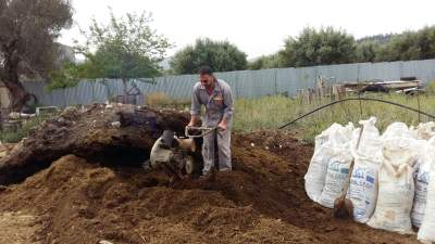 Crushing manure