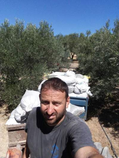 Transporting the manure to my olive grove