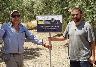 Naming and mapping my olive groves